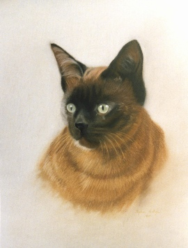 Pastel Pet Portrait of a Cat.